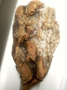 Tree chip