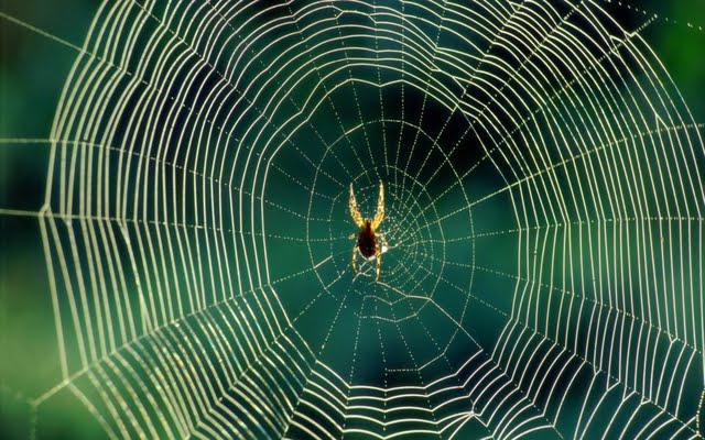 a-spider-in-its-web-70867